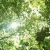 植物(樹木・植栽)の日射遮蔽効果の検証