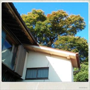 日本家屋,古民家,昭和の家