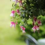 長期留守中に役立つ鉢植え枯れ防止グッズ