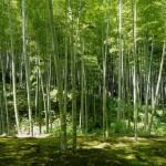 竹を活用して竹害を減らす