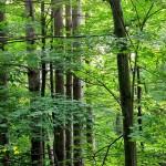 無垢木材の等級の見方