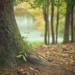 森林と災害の関係について